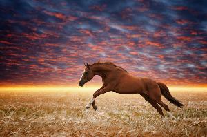 horse whisperer healing
