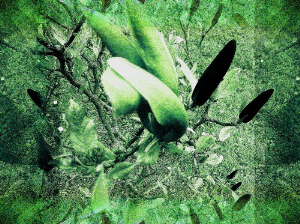 Elements 8 | Photos and Images | Digital Art