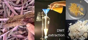 willy myco - stb extraction