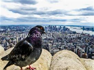 bird view empire state building new york