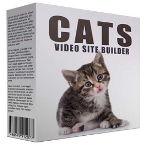 new cats video site builder