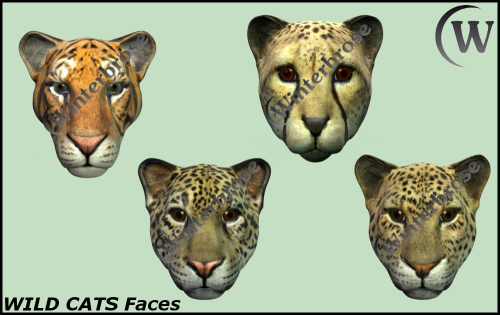 Second Additional product image for - WILD CATS - Faces