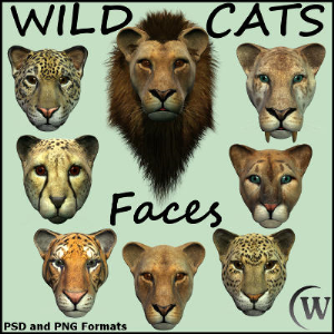 wild cats - faces