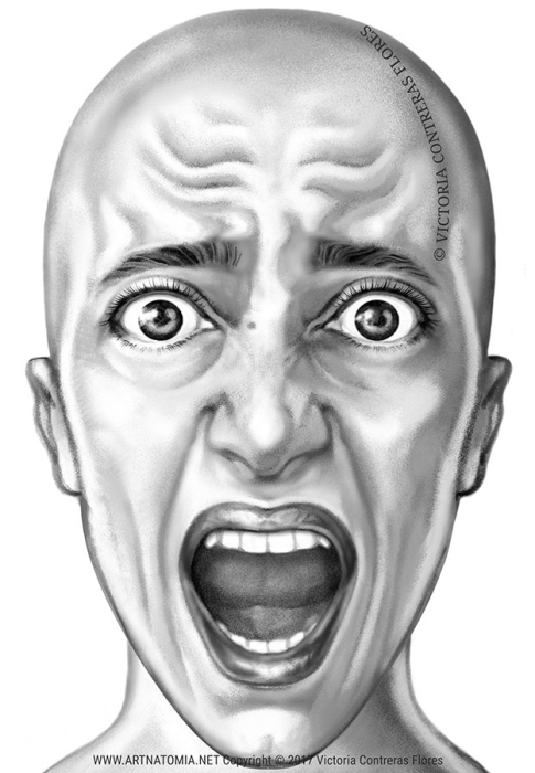 Second Additional product image for - ARTNATOMYA Face Expressions Library (16 images)