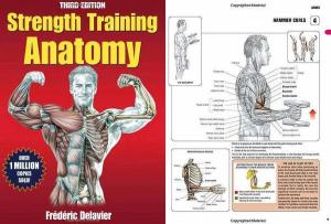 strenght training anatomy 3