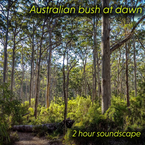 First Additional product image for - Australia bush at dawn soundscape