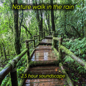 nature walk in the rain