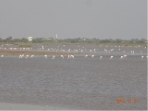 photos Flamingo | Photos and Images | Nature