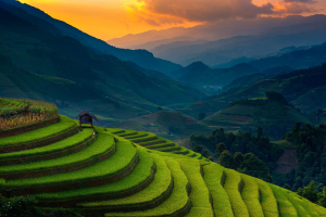 Terrace Field | Photos and Images | Agriculture