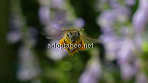 Fourth Additional product image for - Pictures - Spring Honey Bees Beekeeping 2016