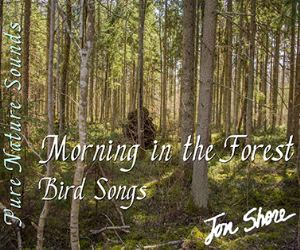 morning in the forest  bird songs