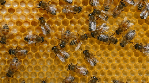 First Additional product image for - Bee Hive Basics 2 - beekeeping beekeeper honey bees