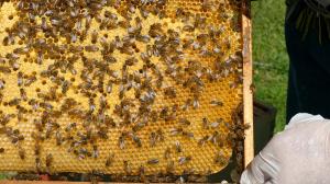 bee hive basics 2 - beekeeping beekeeper honey bees