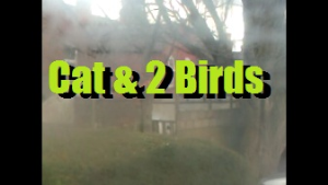 Cat & Birds | Movies and Videos | Action