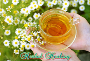 Herbal Healing for Everyone The Powerful Healing Properties Of Herbs | eBooks | Health