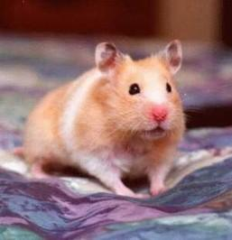 Hamster Care | eBooks | Home and Garden
