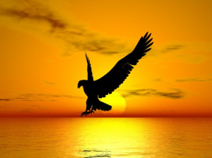 eagle in sunset