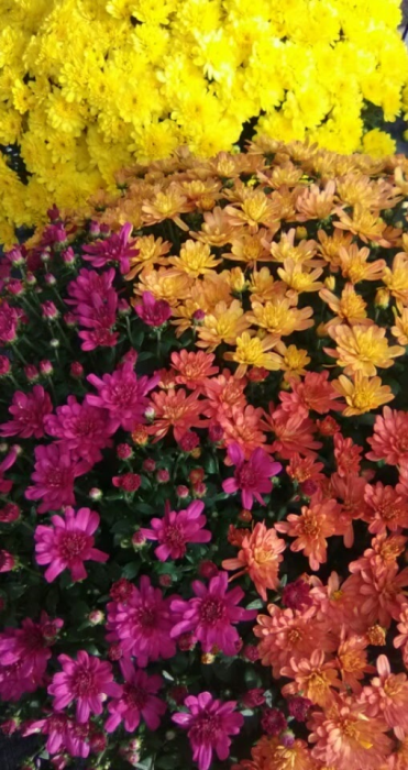 First Additional product image for - Fall Flowers