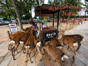 Reizo Shibamoto Nara 5.1 Surround | Music | Classical