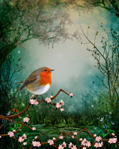 Robin sitting on a cherry tree branch | Photos and Images | Fine Art