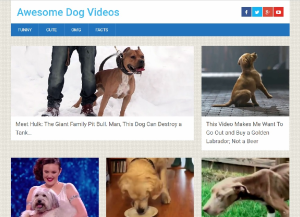 premium dogs viral video site