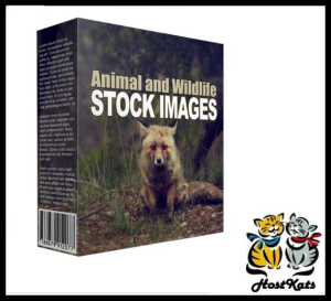 animal and wildlife stock images