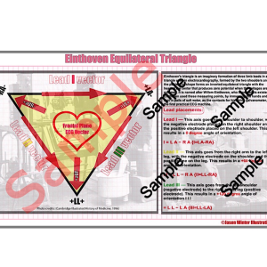 einthoven's triangle (pdf) card