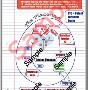 fetal circulation (pdf) file