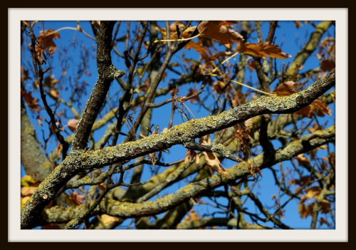 First Additional product image for - Tree Branches