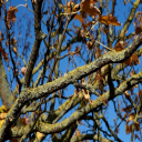 Tree Branches | Photos and Images | Nature