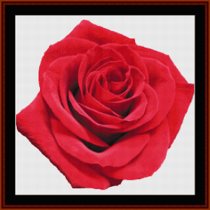 red rose - custom cross stitch pattern by cross stitch collectibles