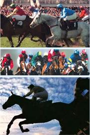 horse racing system u/w/e | eBooks | Sports