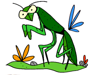 colored praying mantis illustration