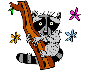 colored raccoon illustration