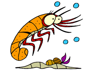 colored shrimp illustration