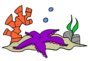 colored starfish illustration