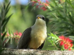water bird or cuckoo