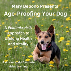 age-proofing your dog video program
