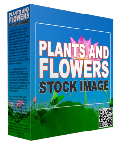 29 plants and flowers stock images