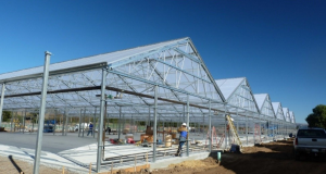 global greenhouse vegetable growers- new project plans- july 2018