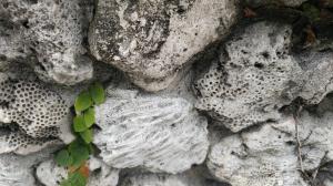 bahamian wall