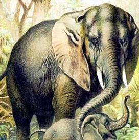 100 Vintage Animal Prints - Windows Screensaver | Software | Screensavers