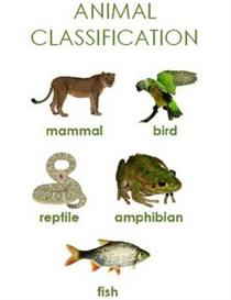 Animal Classification Primary Unit Study | eBooks | Education