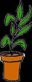 Potted Plant - psd | Other Files | Clip Art