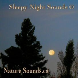 Sleepy Night Sounds | Music | New Age