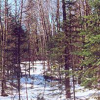 Late Winter Wilderness   Music   New Age