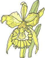 Jonquil Cross Stitch Pattern | eBooks | Arts and Crafts