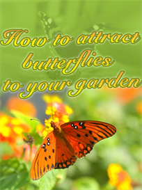 How to Attract Butterflies to Your Garden | eBooks | Home and Garden