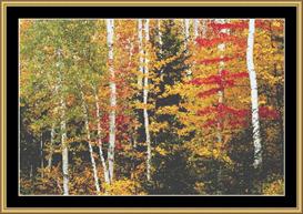 Birch Forest | Crafting | Cross-Stitch | Other