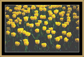 Field Of Tulips | Crafting | Cross-Stitch | Other